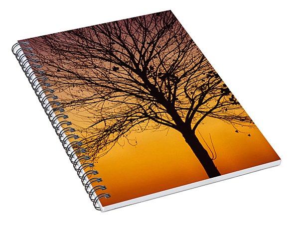 Sunset Tree Spiral Notebook