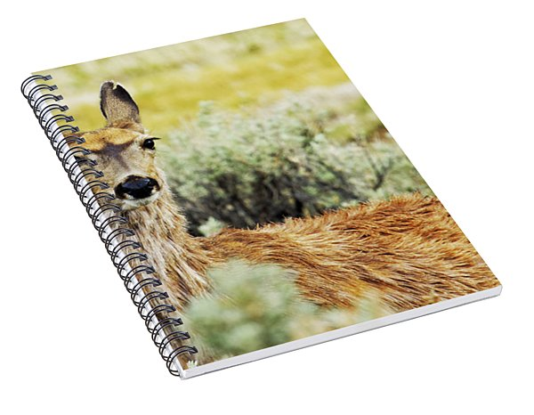 Surround Sound Spiral Notebook