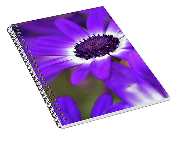 The Purple Daisy Spiral Notebook