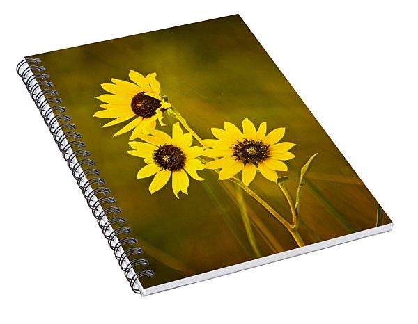 A Trio Of Black Eyed Susans Spiral Notebook