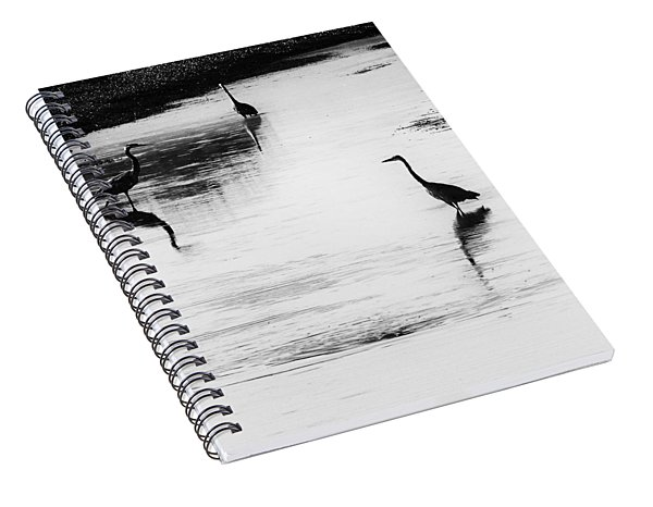 Trilogy - Black And White Spiral Notebook