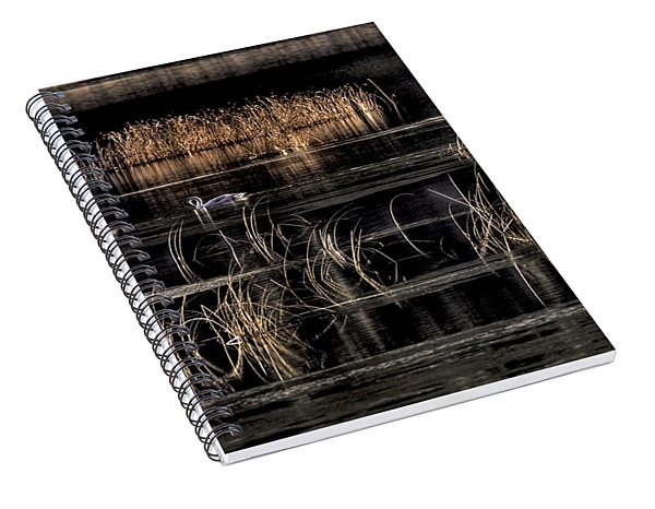 Trumpeter Swans A Swimming Spiral Notebook