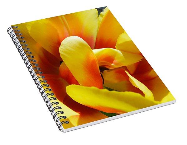 Spiral Notebook featuring the photograph Tulip Unfolding by Kristen Fox