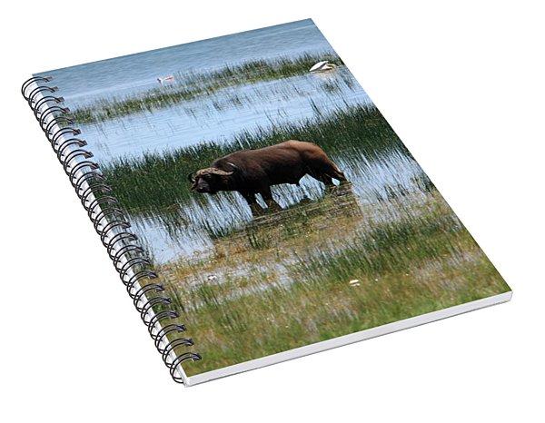 Water Buffalo At Lake Nakuru Spiral Notebook