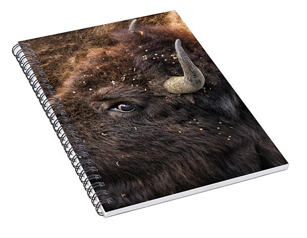 Spiral Notebook featuring the photograph Wild Eye - Bison - Yellowstone by Belinda Greb