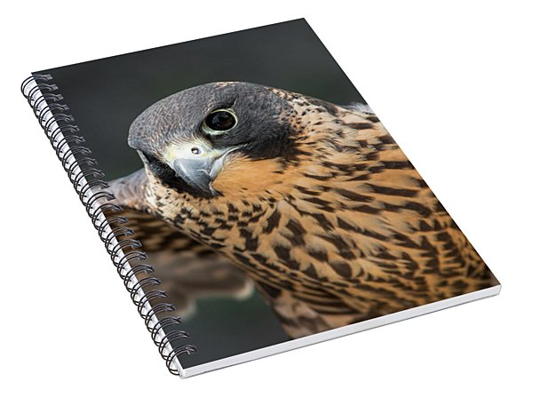 Winged Portrait Spiral Notebook