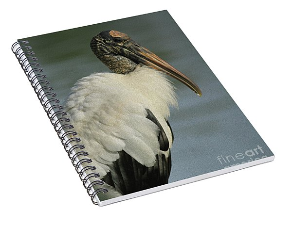 Wood Stork In Oil Spiral Notebook