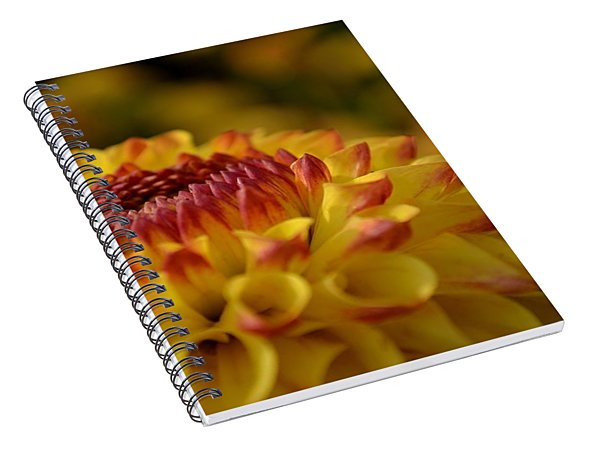 Yellow Dahlia Red Tips Spiral Notebook