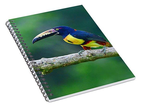Collared Aracari Spiral Notebook