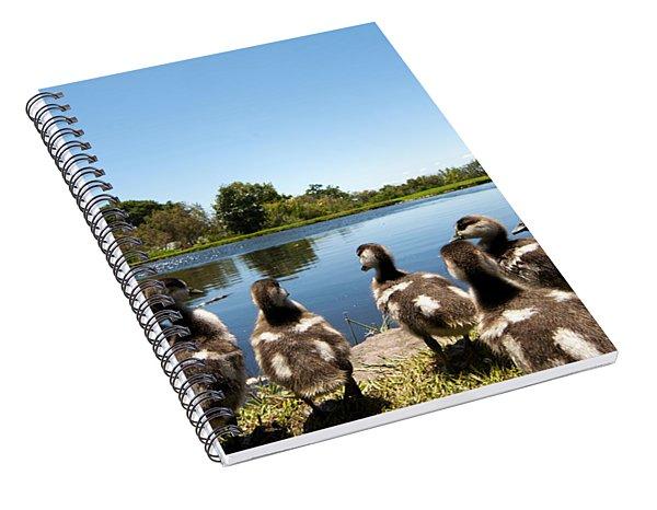 Egyptian Geese Spiral Notebook