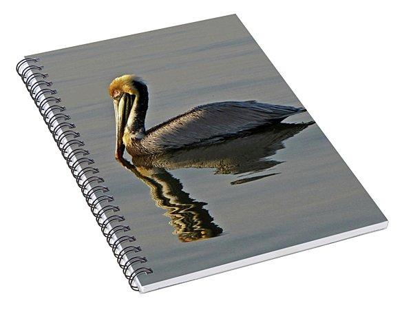Florida Pelican Spiral Notebook