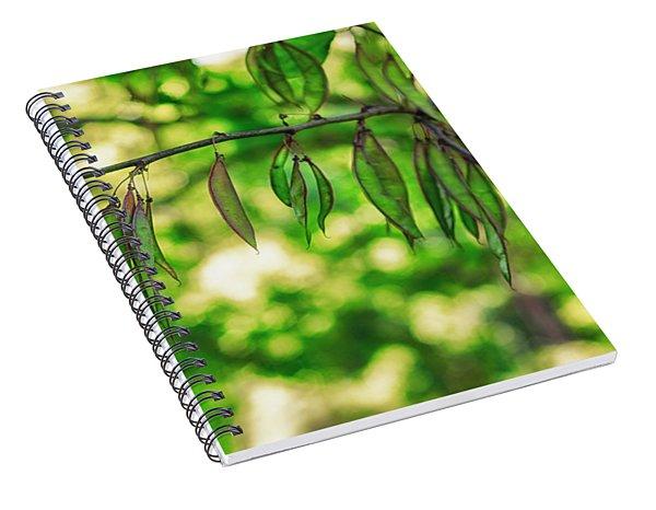 Green Redbud Seed Pods Spiral Notebook