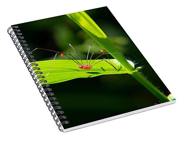Itsy Bitsy Spider Spiral Notebook