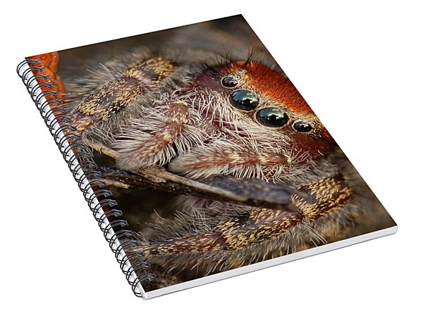 Jumping Spider Portrait Spiral Notebook