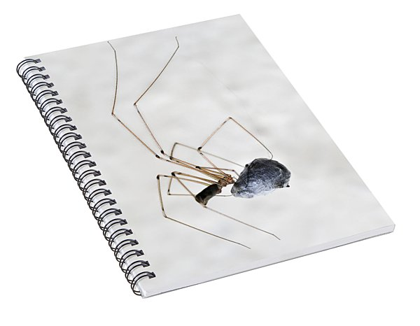 Spider Wrapping Fly Spiral Notebook