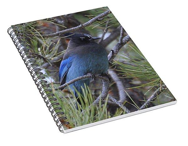 Stellar's Jay In Profile Spiral Notebook