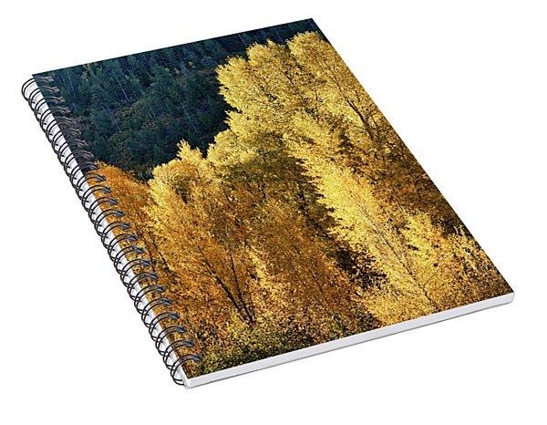 Aspens In Autumn II Spiral Notebook