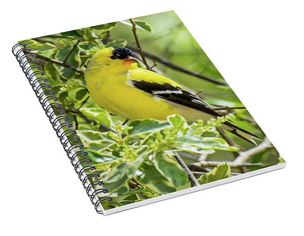 Blending In Spiral Notebook