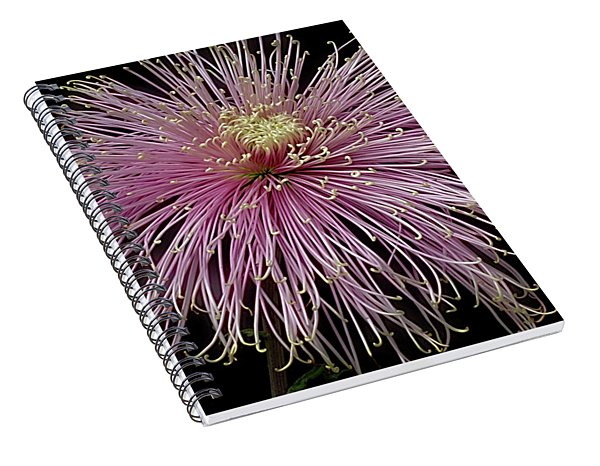 Spiral Notebook featuring the photograph Chrysanthemum 'mystic' by Ann Jacobson