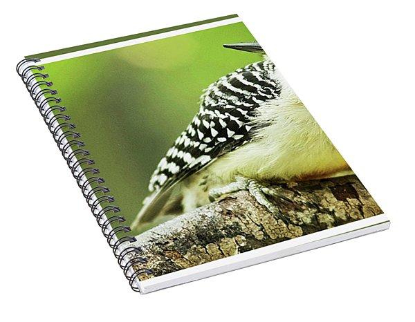 Red Bellied Woodpecker, Male, Animal Portrait Spiral Notebook