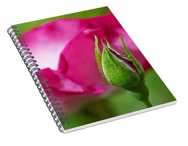 Budding Rose Spiral Notebook