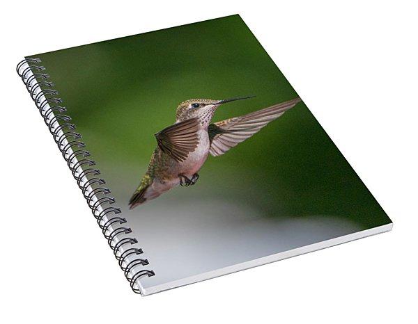 Female Ruby Throated Hummingbird Spiral Notebook