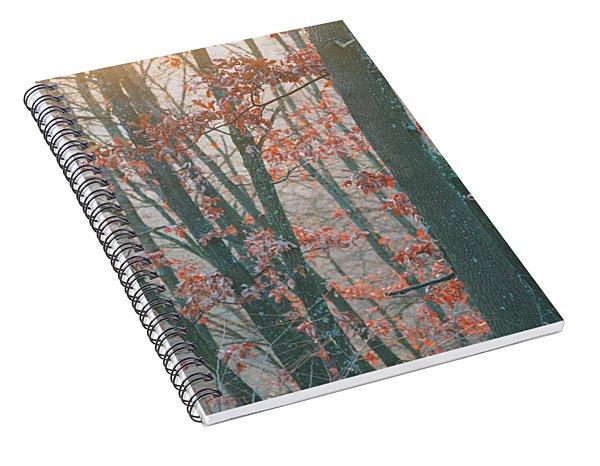 Autumn Forest Spiral Notebook