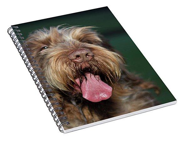 Brown Roan Italian Spinone Dog Head Shot Spiral Notebook