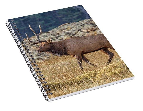 6 X 1 Loser Bull Elk Spiral Notebook