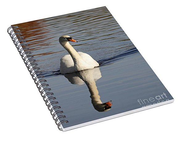 A Graceful Mute Swan Uk Spiral Notebook