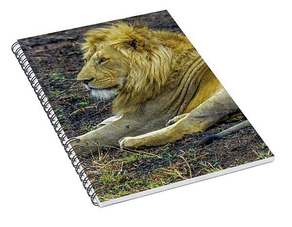 African Lion Resting Spiral Notebook