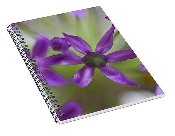 Allium Aflatunense Spiral Notebook