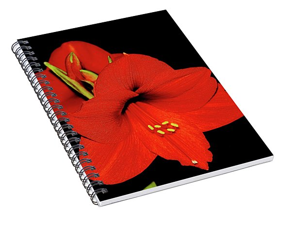 Amaryllis Display Spiral Notebook