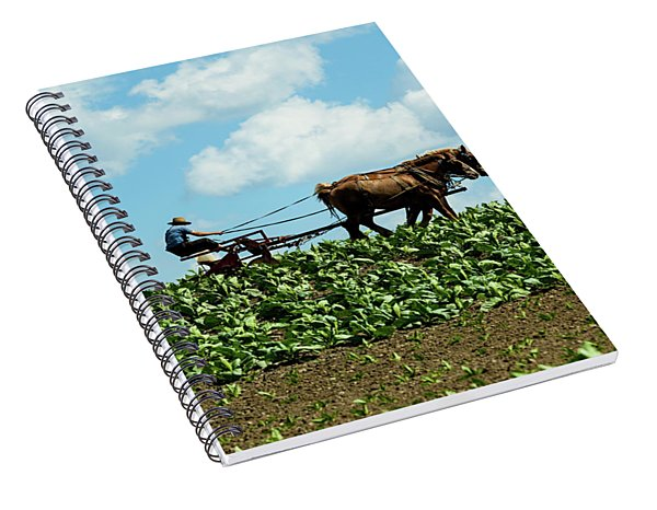 Amish Farmer With Horses In Tobacco Field Spiral Notebook
