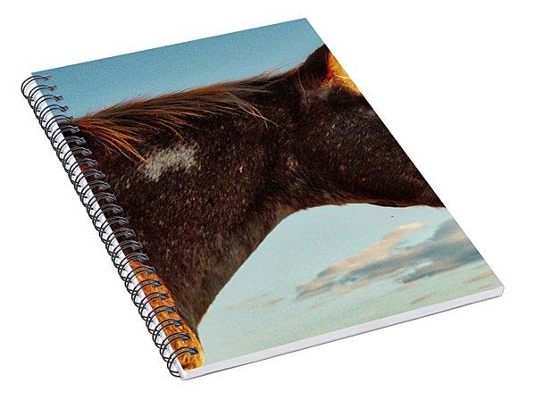 Appaloosa Mare Spiral Notebook