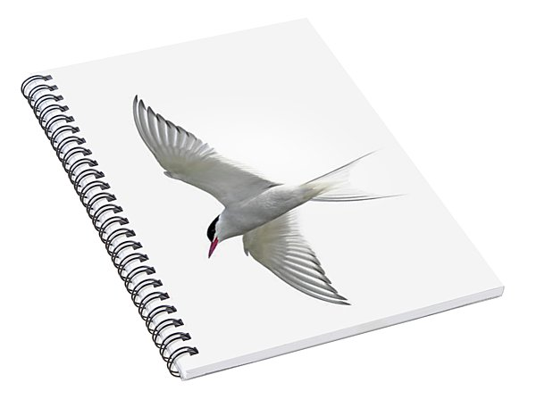 Arctic Tern Flying In Mist Spiral Notebook