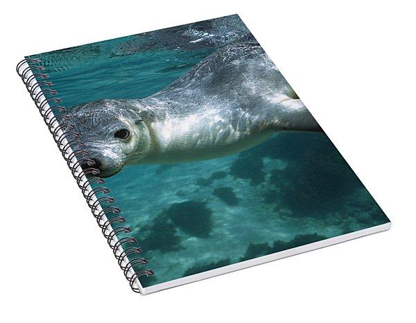 Australian Sea Lion Neophoca Cinerea Spiral Notebook
