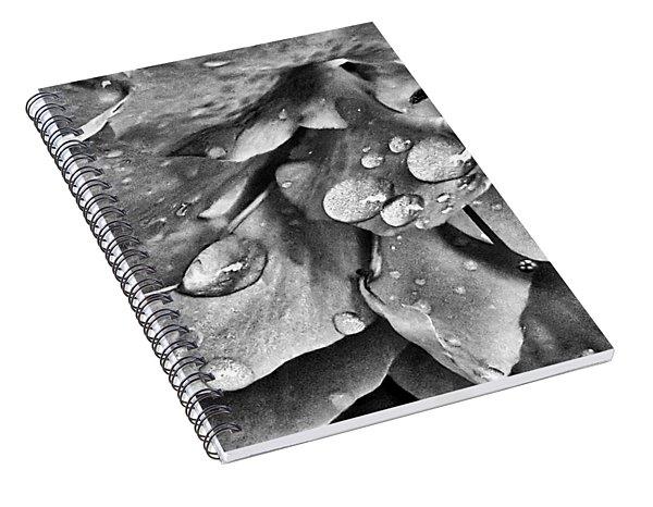 Azalea Rain Drops 3 Spiral Notebook