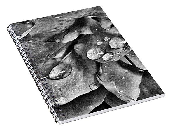 Azalea Rain Drops 4 Spiral Notebook
