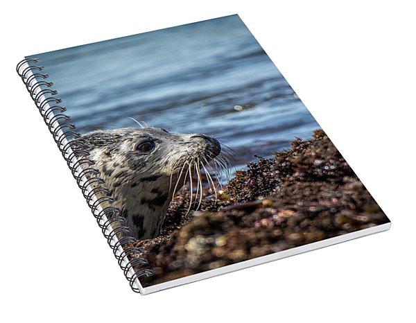 Baby Seal Spiral Notebook