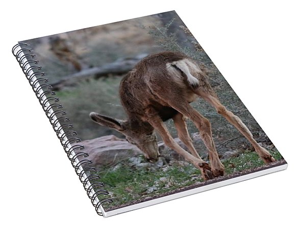Back Into The Woods Spiral Notebook