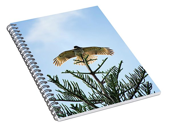 Backlit Landing Hawk Spiral Notebook
