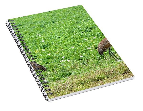 Balance And Majesty Spiral Notebook