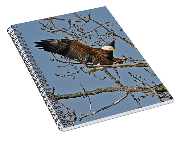 Bald Eagle Landing Spiral Notebook