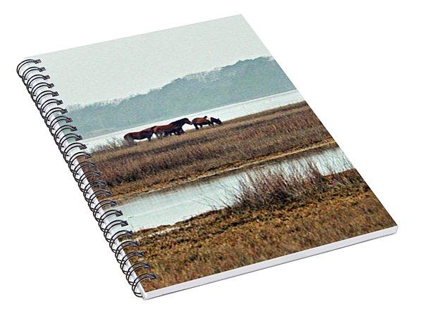 Band Of Wild Horses Along Sinepuxent Bay Spiral Notebook