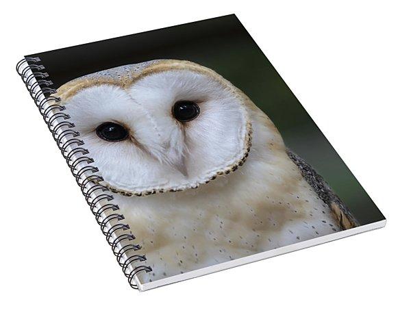 Barn Owl Portrait Spiral Notebook