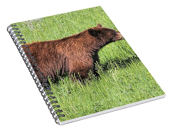Bear Eating Daisies Spiral Notebook