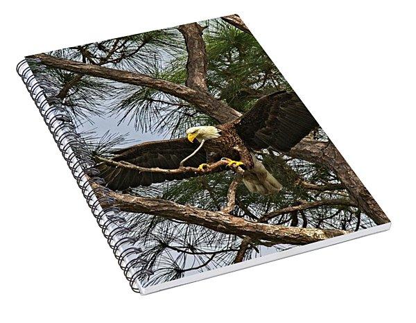 Beautiful Florida Adult Bald Eagle  Spiral Notebook