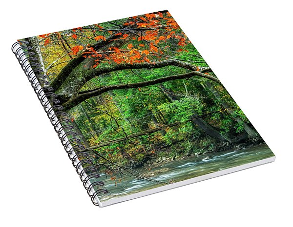 Beech Tree And Swinging Bridge Spiral Notebook