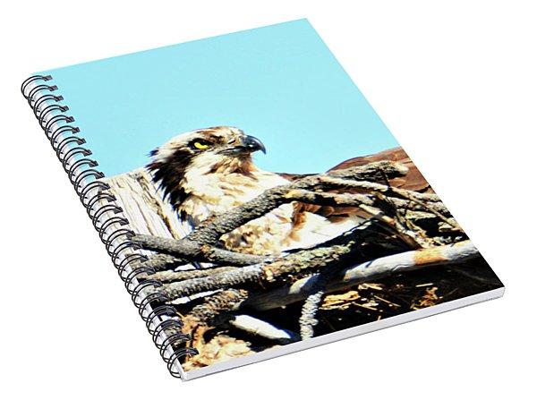 Bend Osprey Spiral Notebook